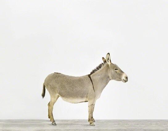2016年机关单位论文大赛一等奖《卸磨杀驴》